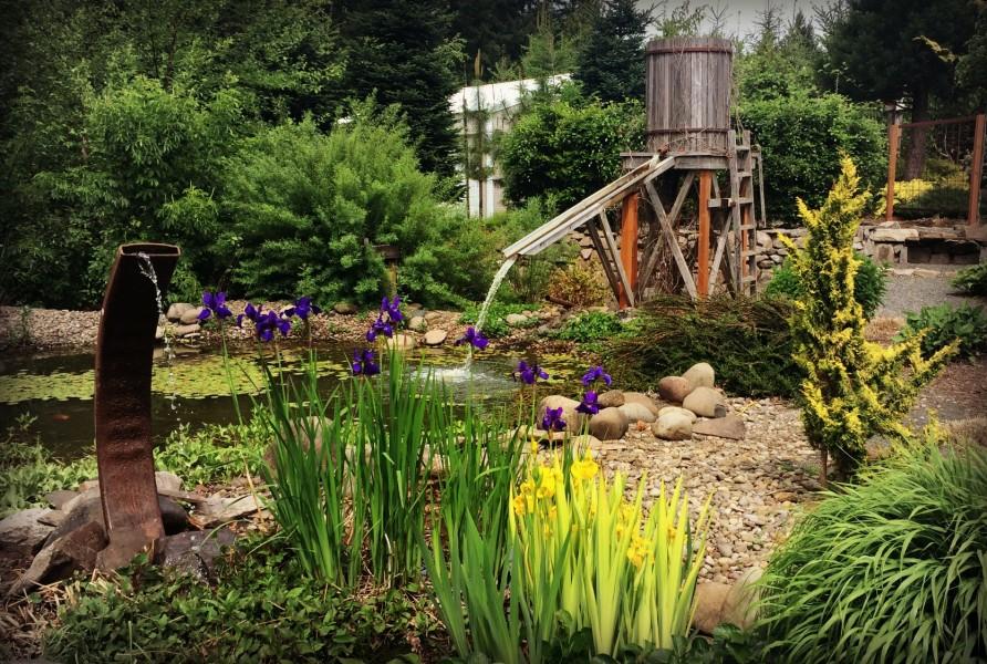 Laurel Hedge Koi Pond